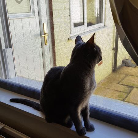 cat mesh window